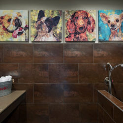The District Lofts, Dog Wash