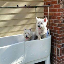 Dog Wash - Tapestry Park Chesapeake